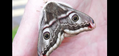 NUI Galway Records 581 Species on Campus in 24 Hours-image