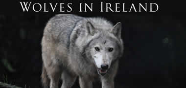 New Book Tracks the Wolf – Ireland's Last Great Predator-image