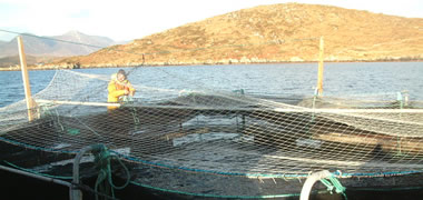 Novel Irish Fish Breeding Programme Reaches Milestone -image