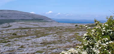 Ancient Animal Dung Helps Botanists Unearth Burren's History-image