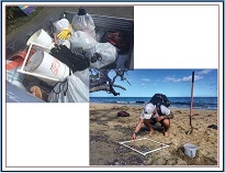 Winter holiday to document the plastic load present on the island of St. Croix, US Virgin Islands-image
