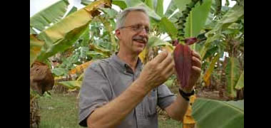 NUI Galway Establishes Collaborative Research Programme on Africa's Staple Crops-image
